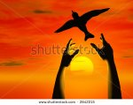 stock-photo-a-pair-of-hands-releasing-a-bird-into-the-sunset-2642215